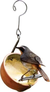 Bird Feeder, Pudding Feeder, ELAINES BIRDING