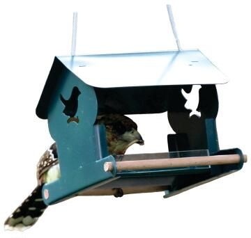 Meal Worm Feeder