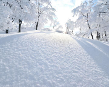 CANVAS TREE SNOW 40X50CM