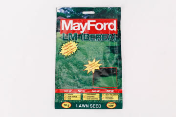 Lawn Seed, LM/ Berea Grass, MAYFORD, 30g