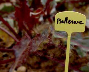 Plant Label, Plastic, NORTENE, 13cm, 10 Per Pack