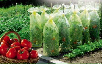 Plant growing cover plastic NORTENE 60cmx10m