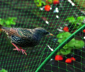 Netting Protection Nortene 2Mx5M Plastic Anti Bird Cover