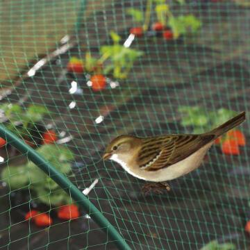 Net Green Nortene 4Mx6M Protects Against Birds