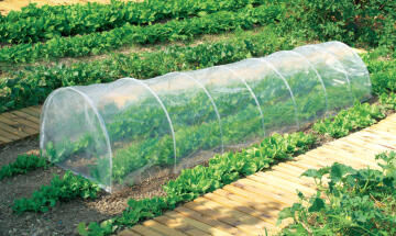 Greenhouse, Tunnel, NORTENE, 60cmx45cmx3M, Include hoops and film
