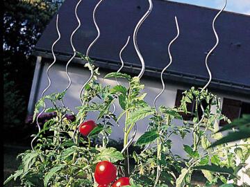 Stake Tomato Nortene 7Mmx1.80M Galvanised Steel