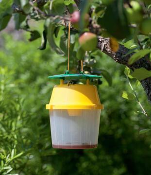 Trap Wasps Nortene 16Cmx22Cm Plastic Green