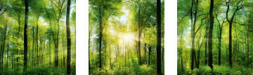 ADHESIVE PICTURE GREEN SUNSHINE 30X30