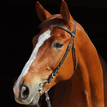 DECO GLASS BAY HORSE 20X20