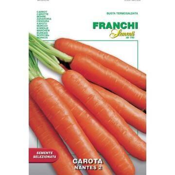 Seed Carrots Nantes 2