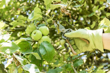 PRUNER BYPASS METAL 61MM 21,5CM GEOLIA