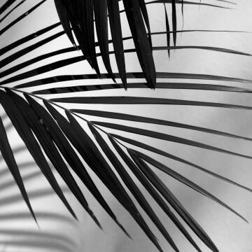 Wall Art Deco Glass Vegetation 30x30cm