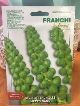 Seed Brussele Sprout/ Mezze Nano