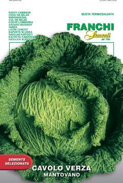 Seed Cabbage/ Sayoy Montovano