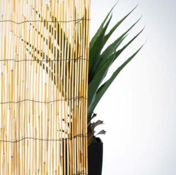 Fence Reed Cane Lowest Price 75% 1,5 m X 3 m