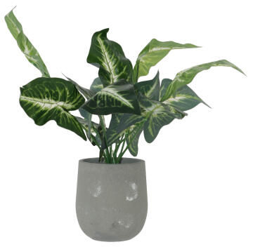 PLANT EVERGREEN POTTED 42CM